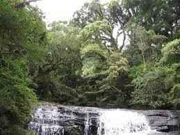 Câmara dos Deputados aprova competência municipal para a definição de Áreas de Preservação Ambiental (APPs) em zonas urbanas